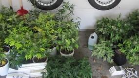 """Cannabispflanzen Setzlinge Waakirchen, © Mit diesen Setzlingen wollte der Tatverdächtige seine """"Ernte"""" hochziehen."""