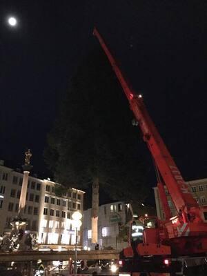 christbaum weihnachtsbaum marienplatz