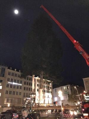 christbaum marienplatz aufbau