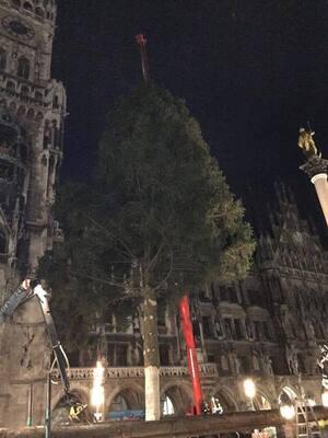 aufbauarbeiten christbaum weihnachtsbaum marienplatz