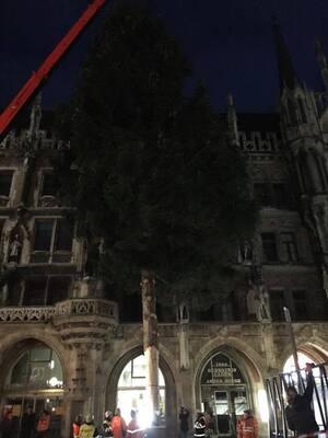 christbaum weihnachtsbaum marienplatz aufbau