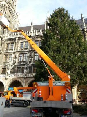 marienplatz christbaum steht