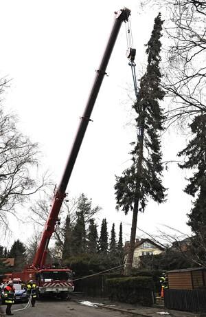 Baum umgestürzt München, © Foto der Berufsfeuerwehr München