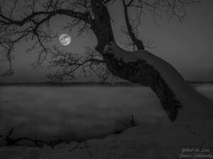 Starnberger See, © Starnberger See - Bild: Janusz Lubojansky - Behind the Lens