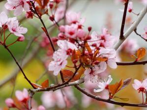 © Frühlingsblüten aus dem Westpark Bild: Agnes aus München