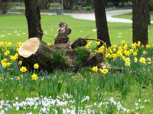 © Der Frühling vertreibt die Nachwehen von Sturm Niklas Bild: Agnes aus München