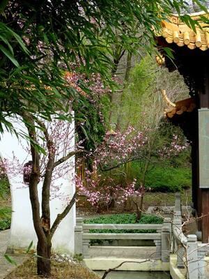 © Asiatische Frühlingsgefühle aus dem Westpark Bild: Agnes aus München