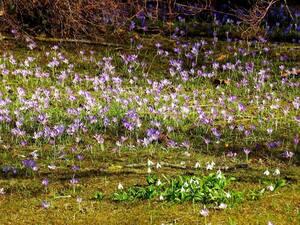 © Blumen heißen den Frühling Willkommen. Bild: Agnes aus München