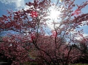 Sonne, Frühling, Botanischer Garten, © Frühlingszauber im Botanischen Garten. Bild: Agnes aus München