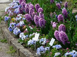 Frühling, Botanischer Garten, Blumen, © Agnes aus München