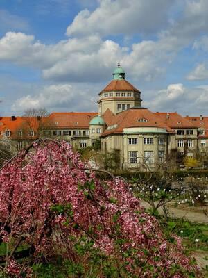 Botanischer Garten, Frühling, © Nicht den Kopf hängen lassen - der Frühling ist doch da. Bild: Agnes aus München
