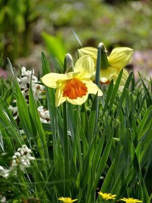 Blumen, Botanischer Garten, © Agnes aus München
