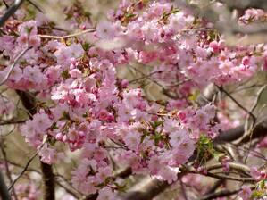 © Was für schöne Blüten! Bild: Agnes aus München