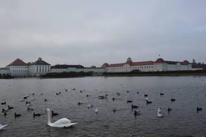 Der Fluß vor dem Schloss Nymphenburg., © Auch Schwäne genießen die Idylle vor dem Schloss Nymphenburg. Foto: Zura aus München