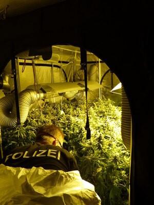 Marihuana-Plantage-Muenchen-1, © Foto: LKA