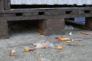 Oktoberfest 2015 - Abfall, © Oktoberfest 2015 - Abfall