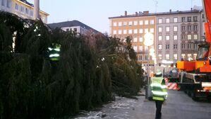 Der Christbaum am Marienplatz wird aufgestellt