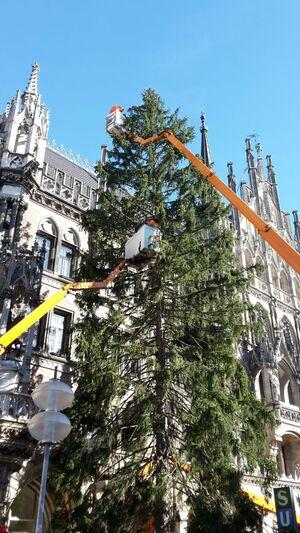 Der Christbaum wird geschmückt