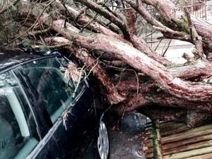 Die Sturmschäden von Orkan Niklas, © Symbolfoto