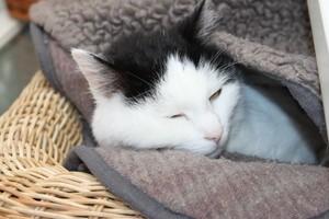 Katze liegt in Korb, © Symbolbild
