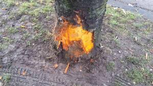 © Auch ein Baum wurde bei dem Unfall beschädigt.
