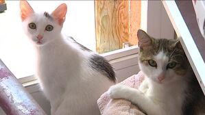 Zwei Katzen am Fenster, © Symbolbild