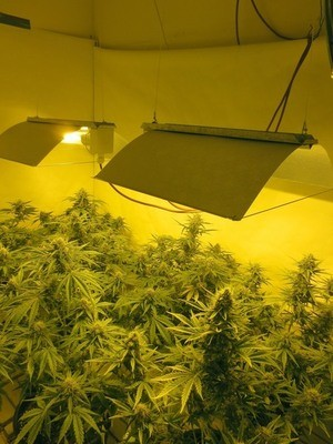 Drogen-Dope-Peace-Shit-Weed-Gras-Marihuana, © LKA Symbolfoto