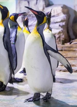 Pinguine aus dem Tierpark Hellabrunn, © Foto: Tierpark Hellabrunn