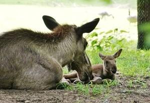 © Tierpark Hellabrunn/Eva Korb