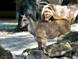© Tierpark Hellabrunn