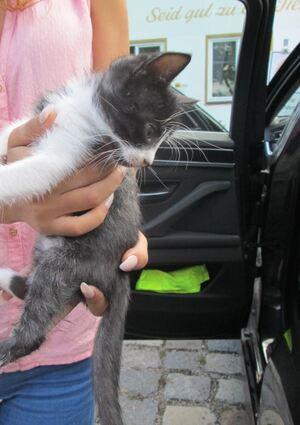 © Die beschlagnahmte Katze - Foto: Polizei