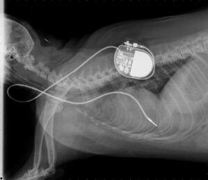 © Foto: Medizinische Kleintierklinik