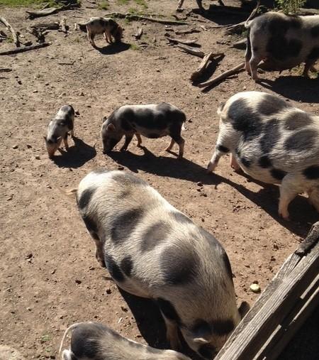 Wildschweine im Wildpark Poing