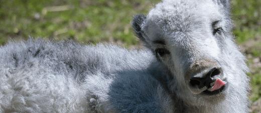© Tierpark Hellabrunn/Daniela Hierl