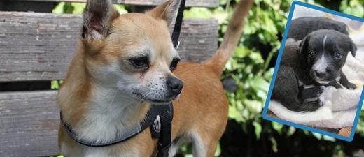 Mehrere Hunde in München - Tipps für Besitzer, © Symbolfoto