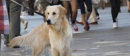 Ein Hund an der Leine, © Symbolfoto