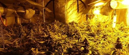 Marihuana-Plantage in Münchner Wohnung gefunden, © Foto: LKA Bayern Symbolfoto