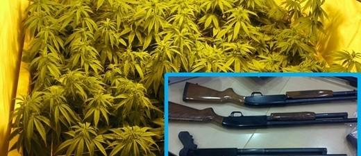 Marihuana-Plantage und Langwaffen, © Symbolbild
