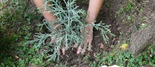 Ein Kind pflanzt einen Baum, © Symbolfoto