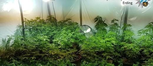 Falschgeld führte die Polizei zu einer Cannabisplantage., © Kriminalpolizeiinspektion Erding