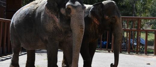 Elefanten des Circus Krone in Spanien, © Circus Krone