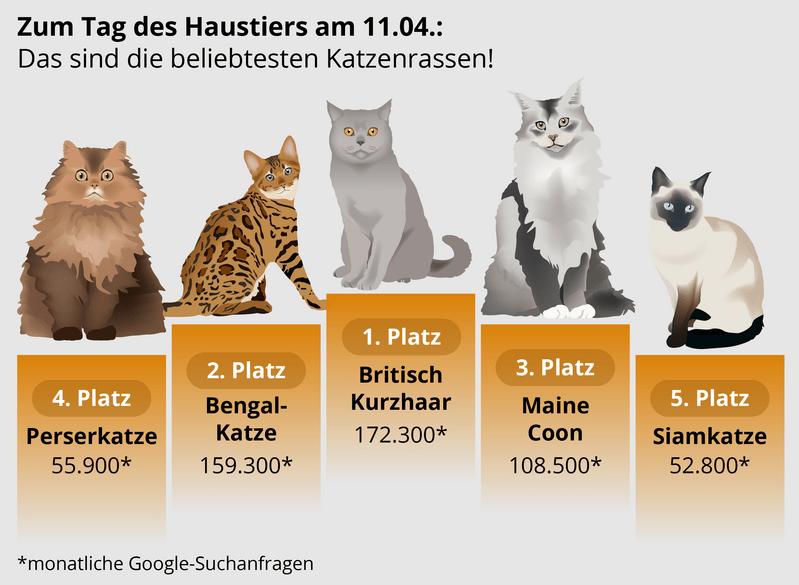 Beliebtesten Katzenarten bei Internetsuchanfragen.