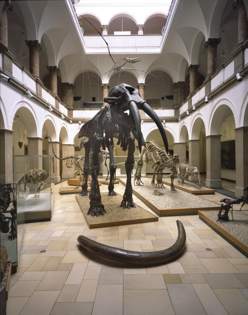 Bayerische Staatssammlung für Paläontologie und Geologie, © Bayerische Staatssammlung für Paläontologie und Geologie