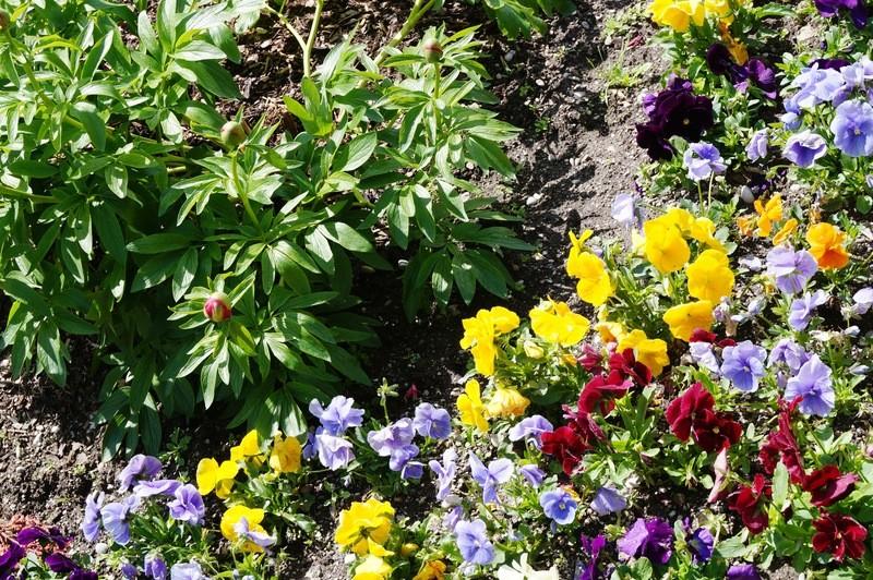 Blumen und Beete