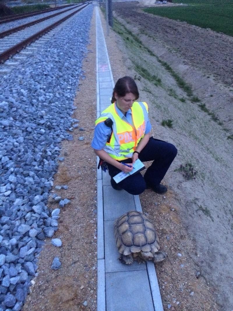 Bundespolizistin mit Riesenschildkröte, © Foto: Bundespolizei - Eine Beamtin mit der gefundenen Schildkröte