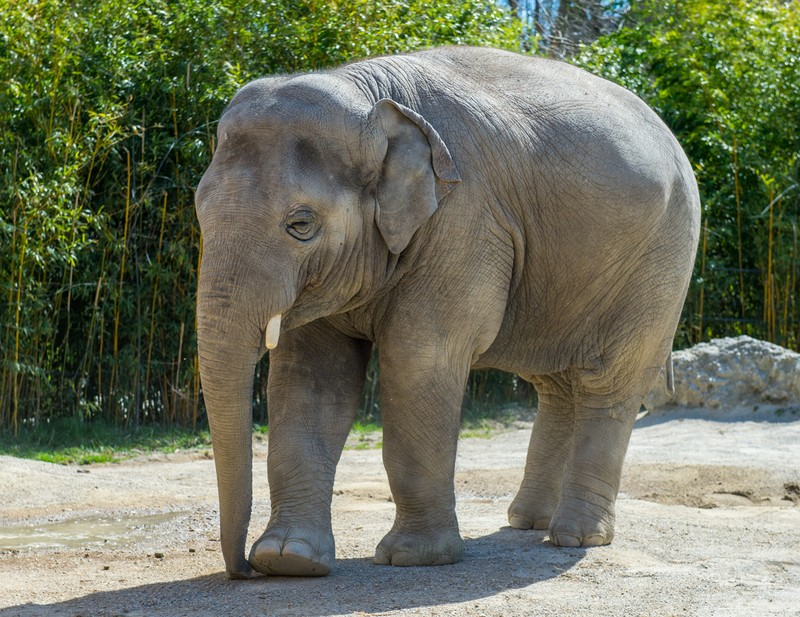Ganz traurig blickt Ludwig drein. , © Ganz traurig blickt Ludwig drein, weil er den Tierpark verlassen muss. Foto: Tierpark Hellabrunn/Marc Müller