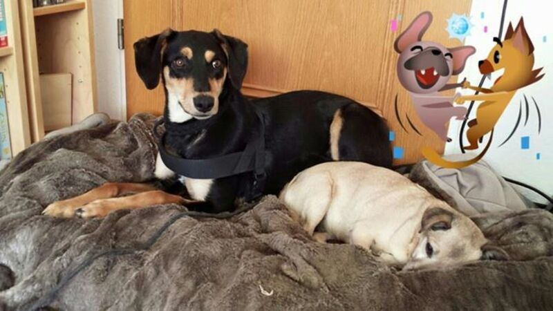Hund Amy ist in München verschwunden