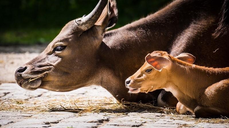 Nachwuchs im Tierpark Hellabrunn, © Nachwuchs im Zoo. Foto: Tierpark Hellabrunn/Annette Wagner