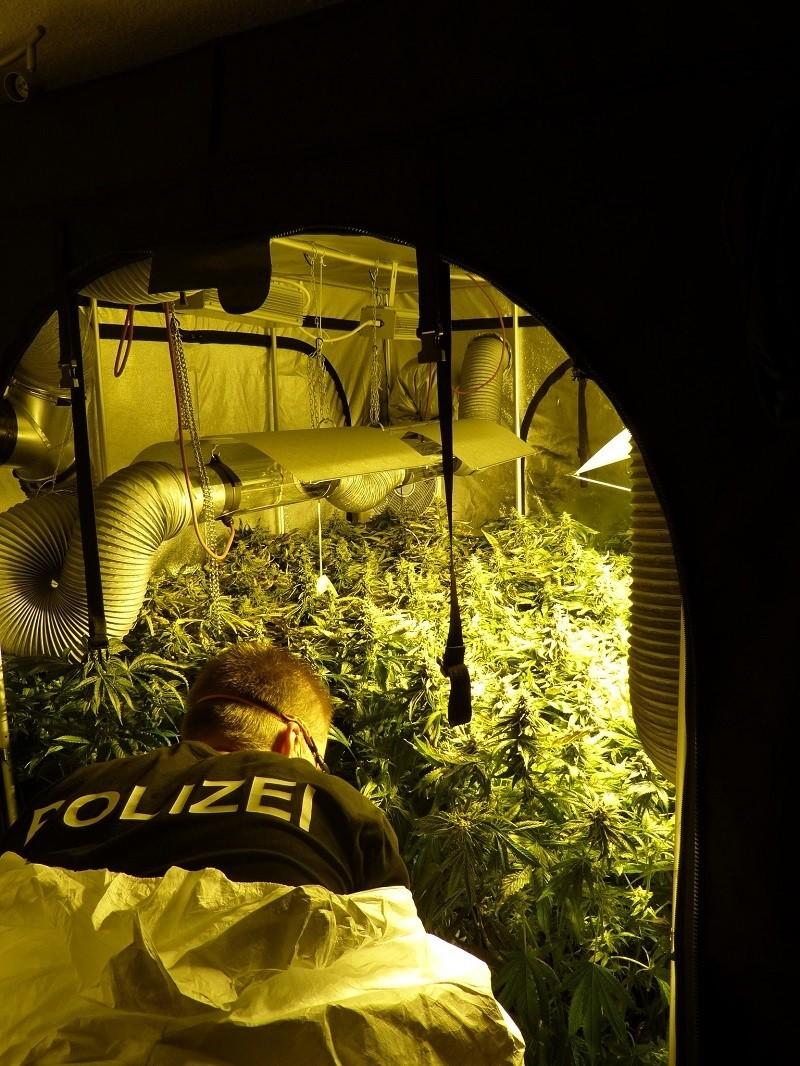 Marihuana-Plantage in einer Münchner Wohnung gefunden., © Foto: Lka Bayern