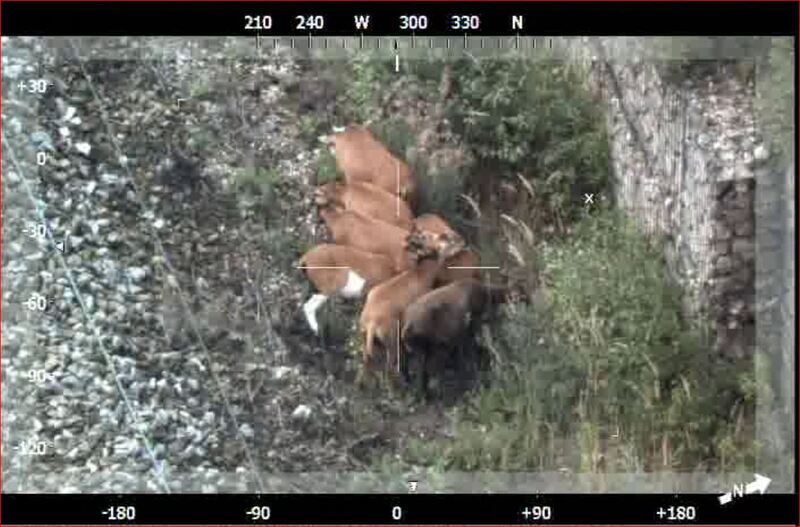 Schafe im Gleis wurden von einem Helikopter entdeckt, © Die Schafe wurden vom Helikopter entdeckt - Foto: Bundespolizei